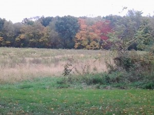 The back of our field in the fall