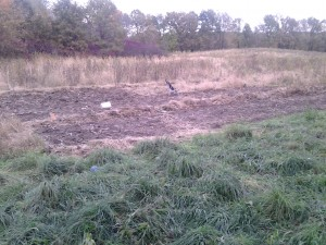 Another view.  I made the second plot wider, as you can see half of it is wider than the other half.