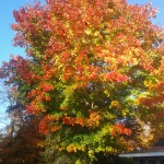 The tree near our house.