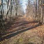 My walk to the blind