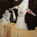 Happy birthday Clover!