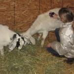 New goats!