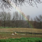 Rainbow landed in our field!  Must be lucky!